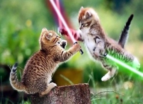 Jedi Kitties