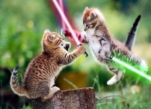 Jedi Kitties